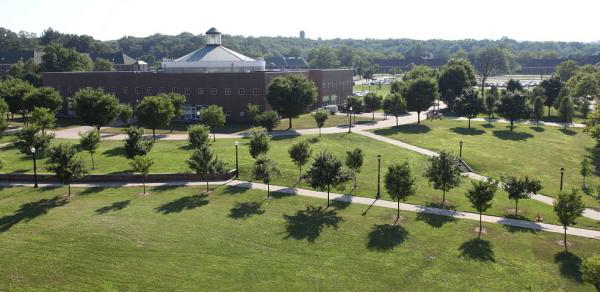 Overhead view of trees on campus